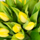 Bouquet de tulipes jaunes