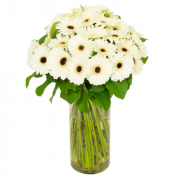 Bouquet de Germinis blanc