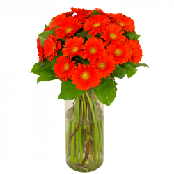 Bouquet de germinis orange