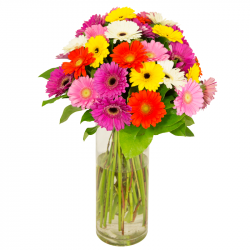 Bouquet de germinis multicolores