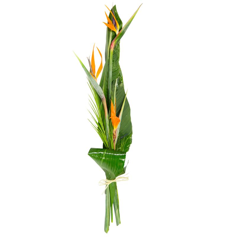 bouquet strelitzia l 39 oiseau du paradis en promotion. Black Bedroom Furniture Sets. Home Design Ideas