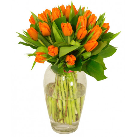Tulipes oranges