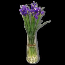 Bouquet d'Iris Mauve