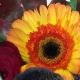 Composition Automnale de Fleurs