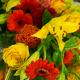 bouquet de fleurs flamboyant