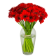 Bouquet de germinis rouge