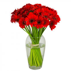 Bouquet de germinis rouges
