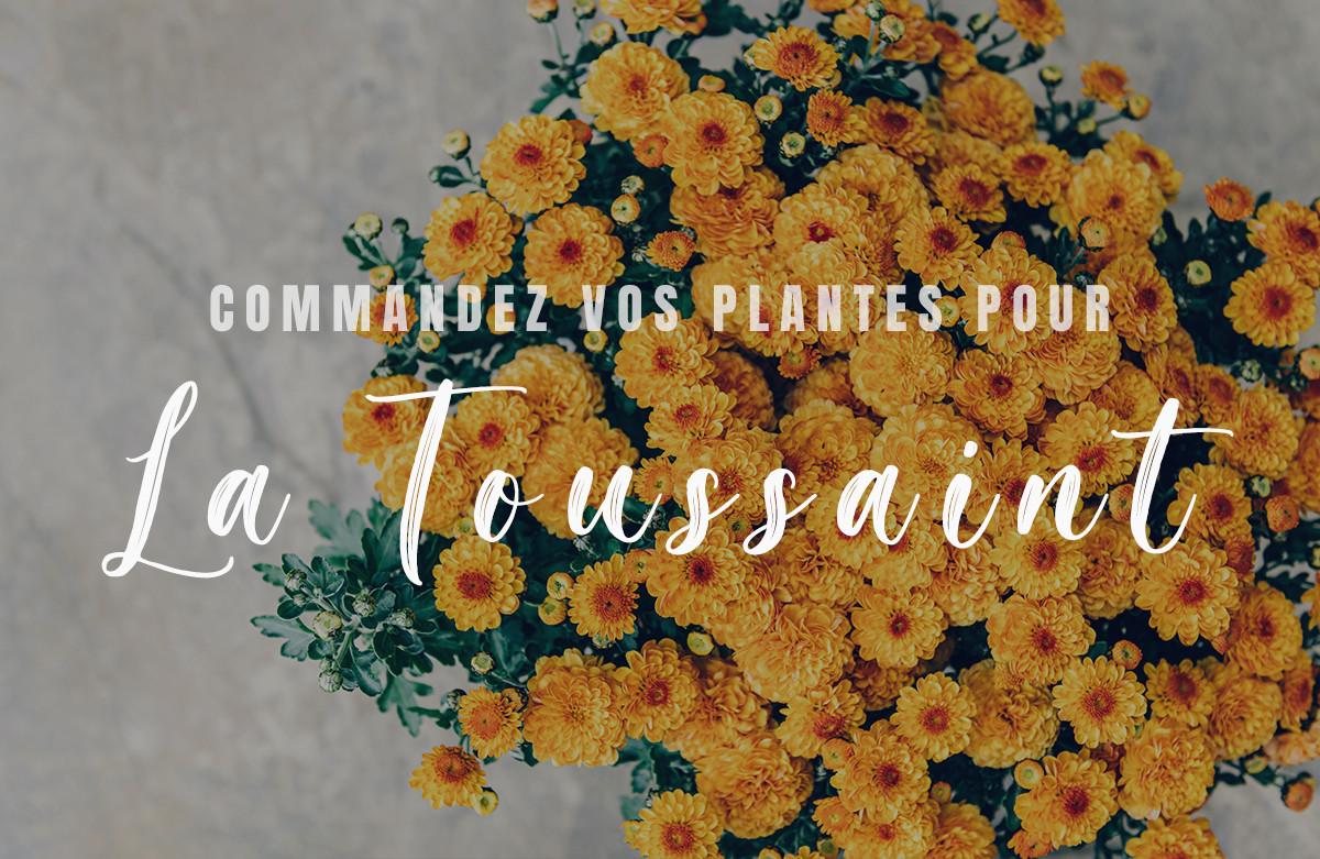 Commande des plantes de la Toussaint