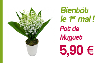 Pot de muguet à 5,90 €